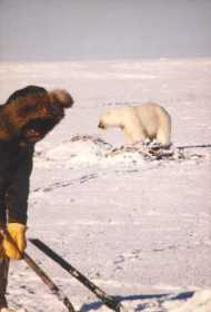 Derek fishing with polar bear near-by